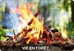 vie en forêt
