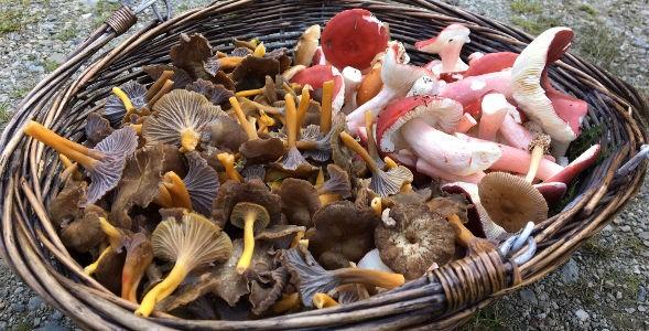 champignons8