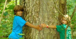 vieille forêt bouleau jaune parc régionale du Massif du Sud
