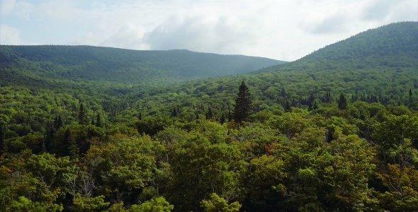 Les écosystèmes forestiers du parc