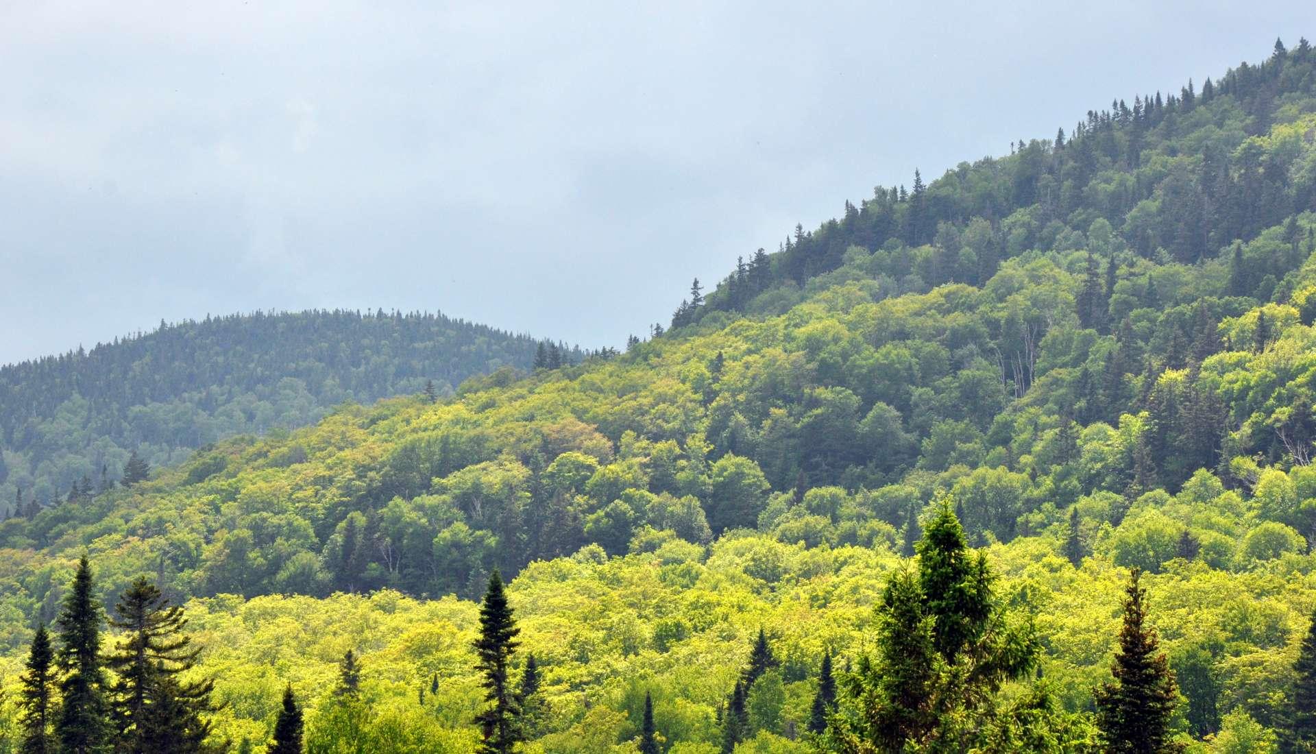 Une montagne de paysages