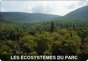Soirée-conférence: les écosystèmes forestiers du parc